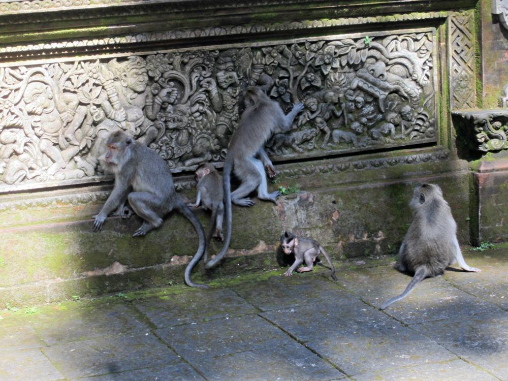 Monkey forest à Ubud, Bali