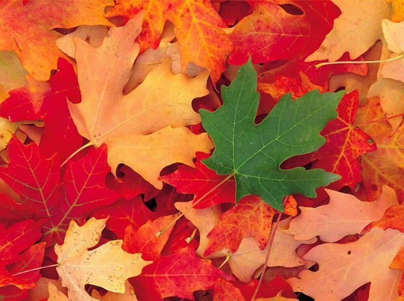 feuilles érable automne vert orange rouge marron - blog voyage Trace Ta Route