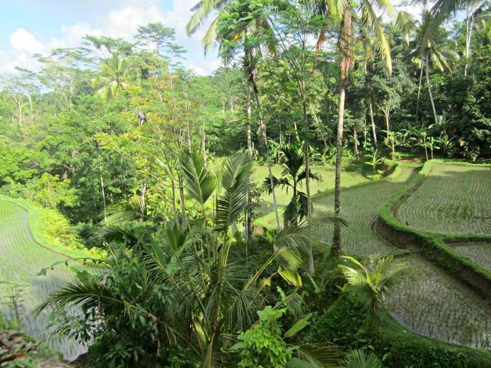 Rizières dans la forêt à Tampaksiring, Bali