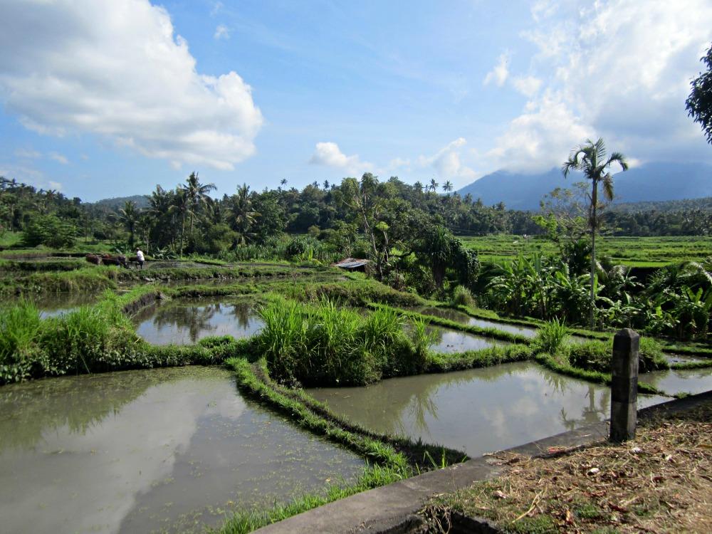 Rizière de Tirtagangga, Bali