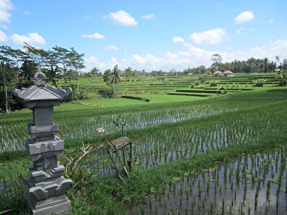 Temple de riziere à Ubud, Bali