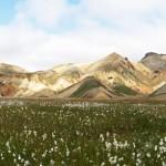 Linaigrettes Montagne Vondugil Landmannalaugar Islande Paysage Iceland Islensk Wild Outdoor Hiking Mountain Landscape