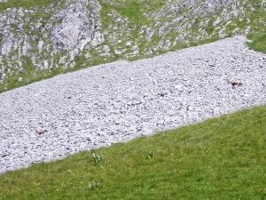 Chamois au Mont Pécloz