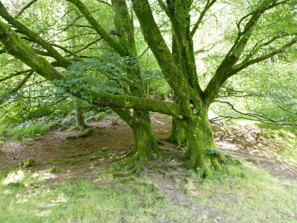 Forêt de Glendalough Forest - Blog Voyage Trace Ta Route