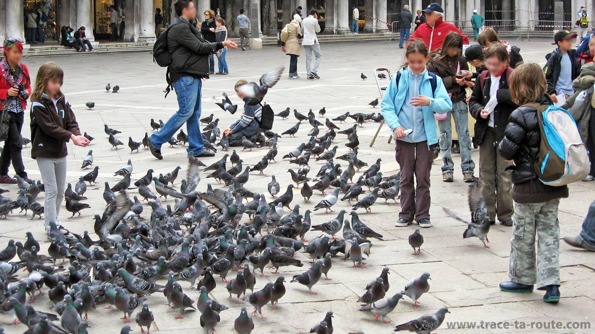 Les pigeons sur la place Saint Marc