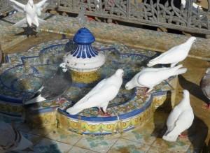 colombes dans le parc maria luisa
