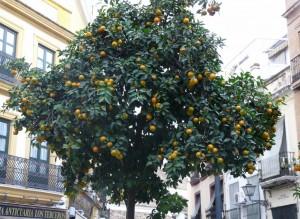oranger - Seville - Trace ta route
