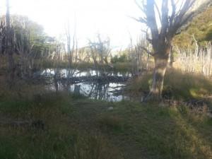 maison des castors parc national terre de feu blog voyage