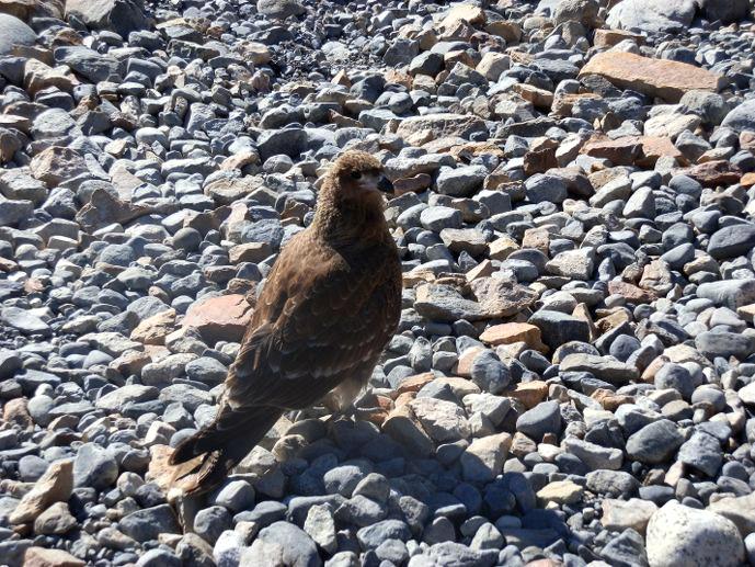 rapace patagonie fitz roy blog voyage