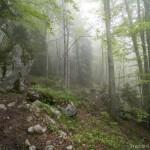 Sentier dans les sous-bois du Trélod (Bauges)
