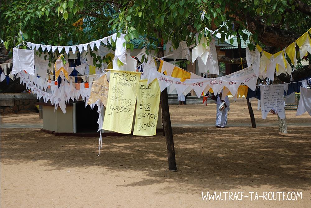 Arbre de prière à Anuradhapura, Sri Lanka