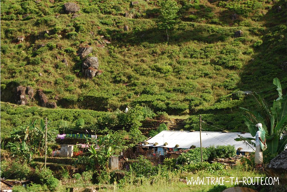 Cueilleuse Tamoule et village, Sri Lanka