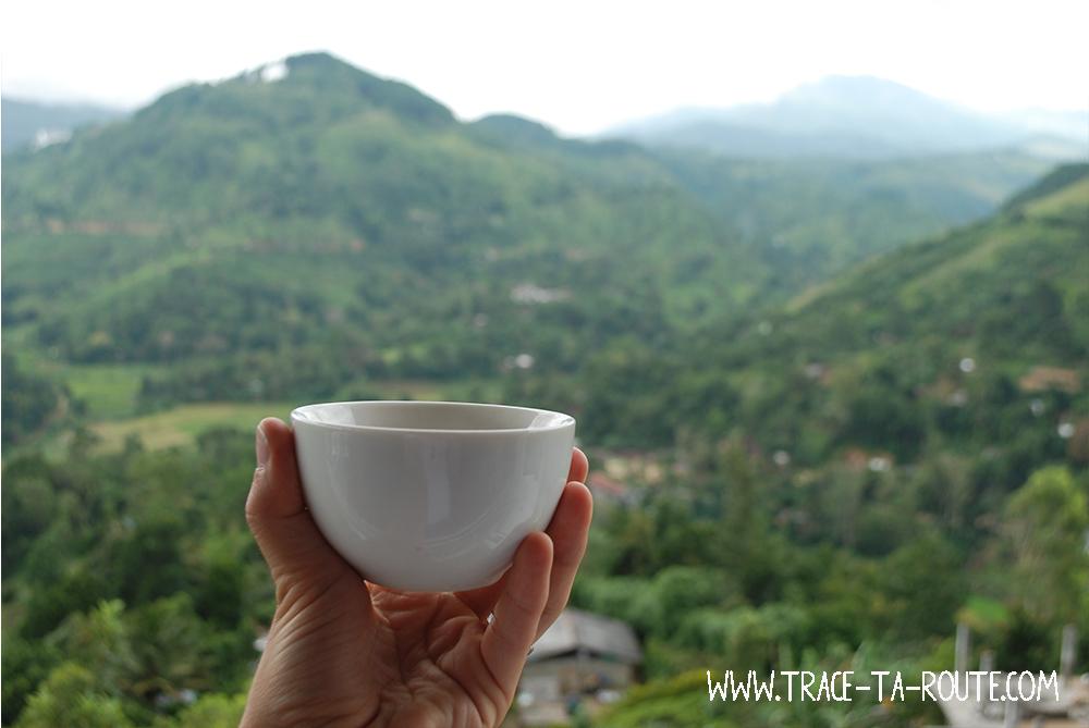 Dégustation de thé à Ella, Sri Lanka