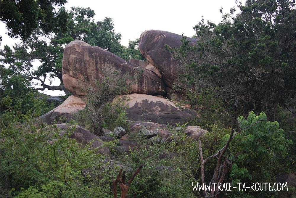 Leopard Rock Yala, Sri Lanka