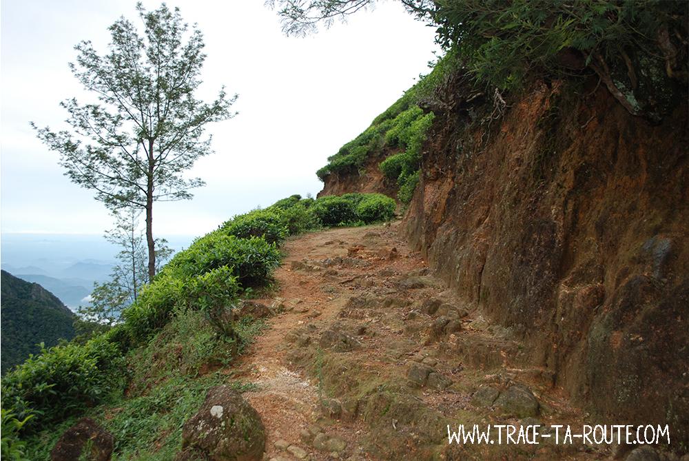 Route dans les plantations de thé, Sri Lanka