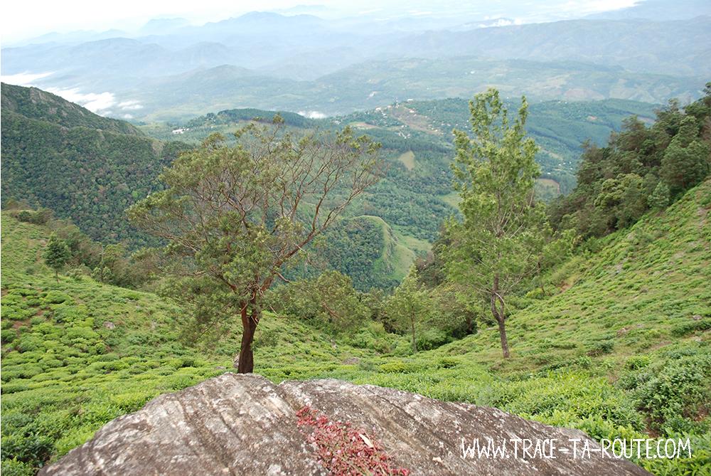 Chemin dans les plantations, Sri Lanka
