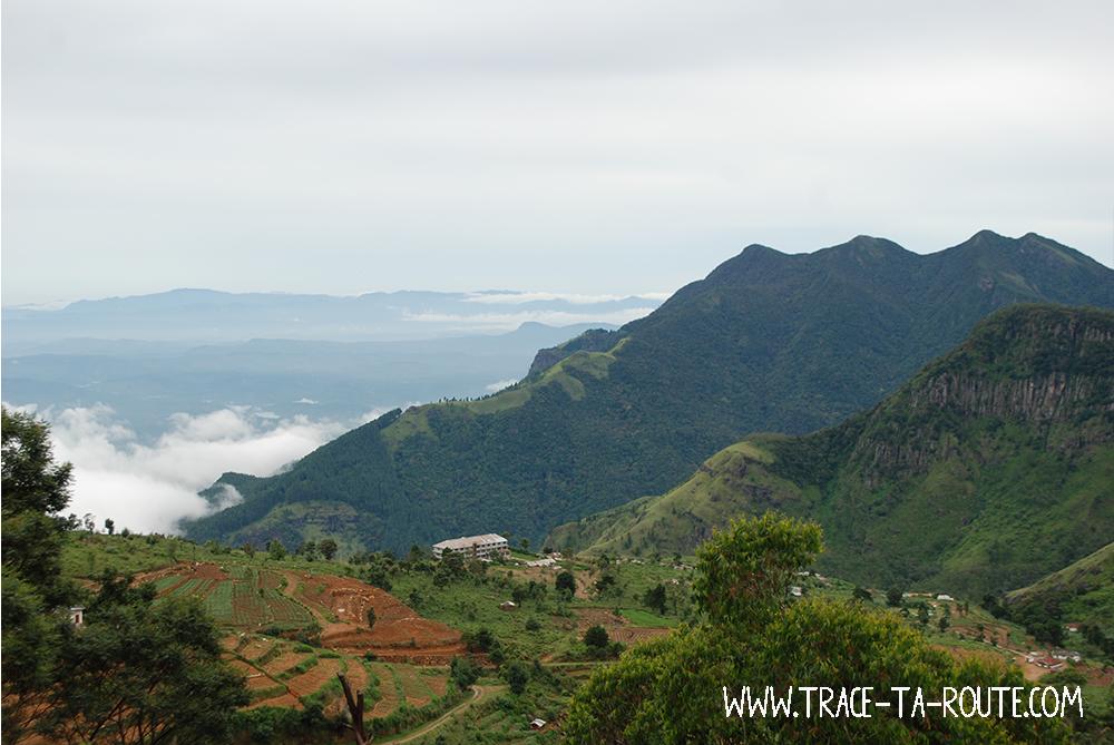 Vallée et champs à Ohiya, Sri Lanka