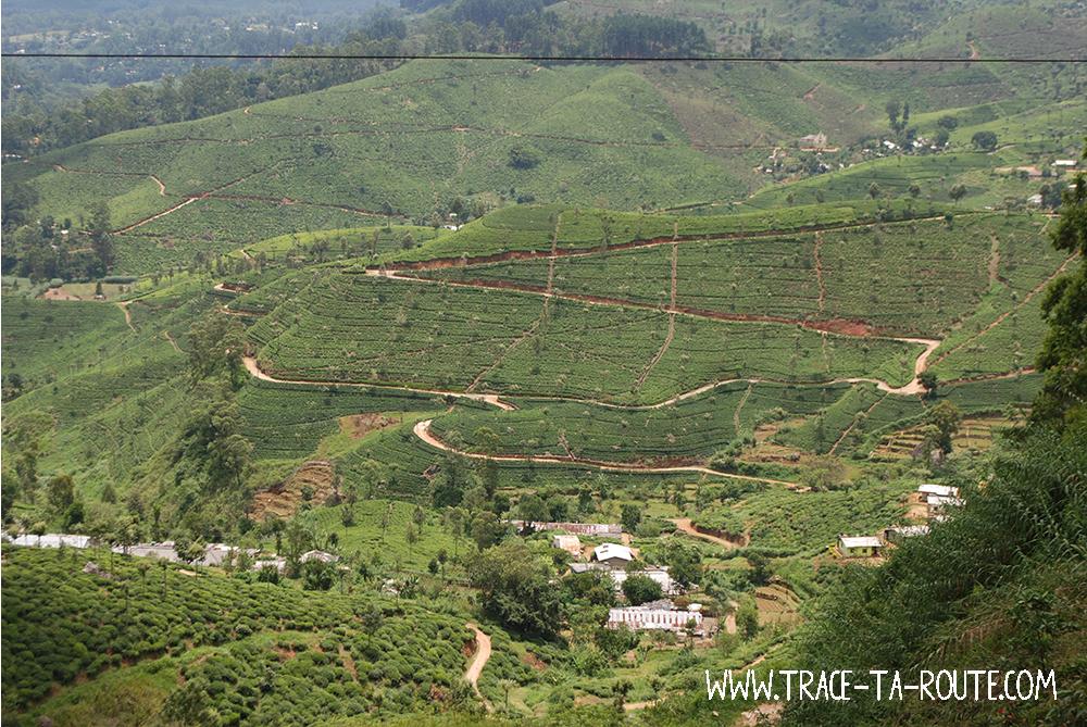 Plantations entre Ohiya et Ella, Sri Lanka