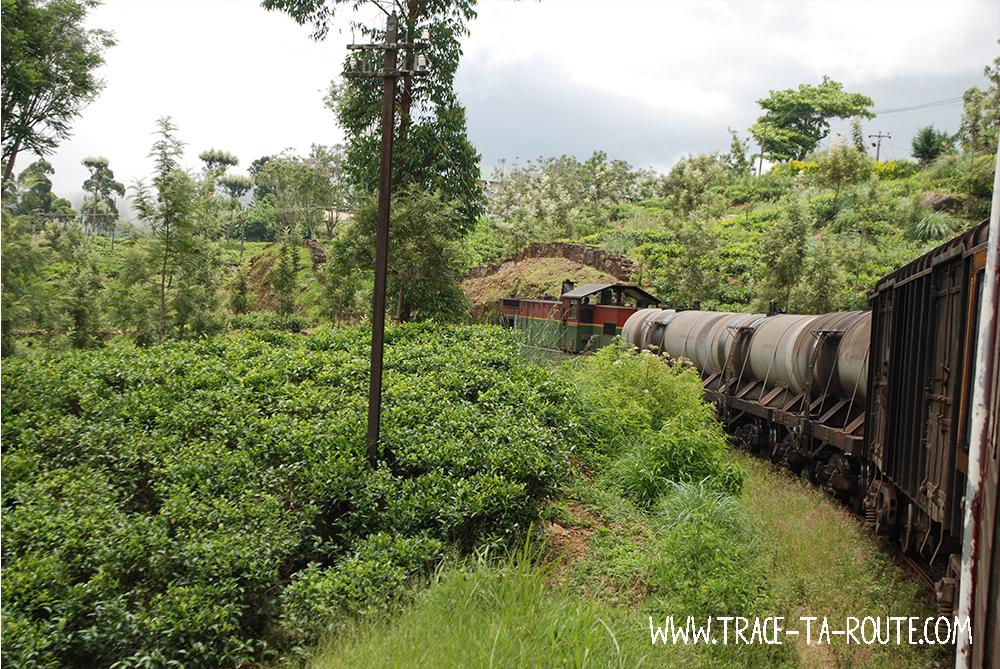 Train entre Ohiya et Ella, Sri Lanka
