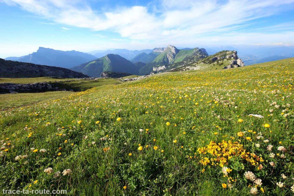 Champ de fleurs sur le plateau de la Dent de Crolles et vue sur le Massif de la Chartreuse