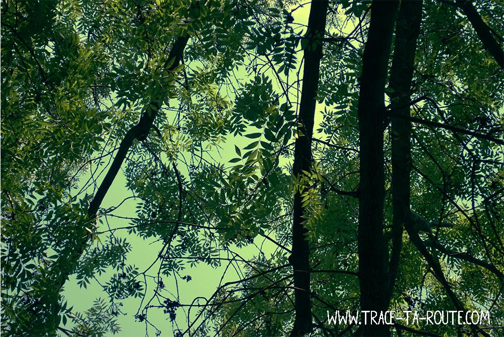 Verdure sur l'île Marguerite- Blog Voyage Trace Ta Route