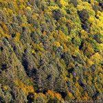 Forêt automne - vue depuis Les Taillées du Sautet, Aviernoz (Parmelan)