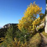 Arbre couleur automne randonnée traversée Grand Montoir -> Petit Montoir au Parmelan