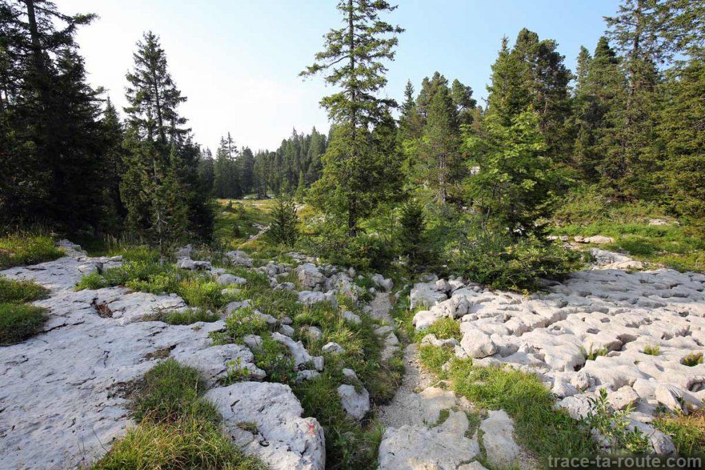 Lapiaz au bord du sentier de randonnée du Plateau du Parmelan