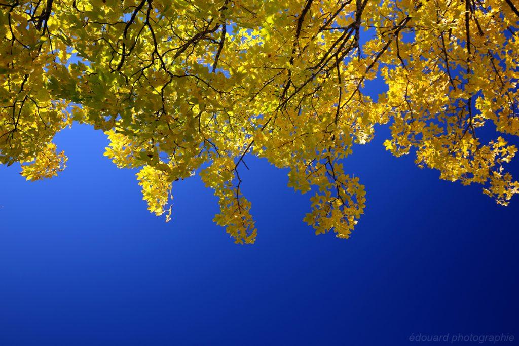 Couleurs d'automne au Parmelan © édouard photographie