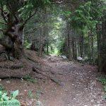 Sentier de randonnée vers le Col de l'Alpe (Chartreuse) depuis le Pré Orcel
