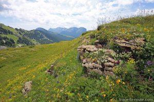 Prairie fleurie au Col de l'Alpe, en Chartreuse