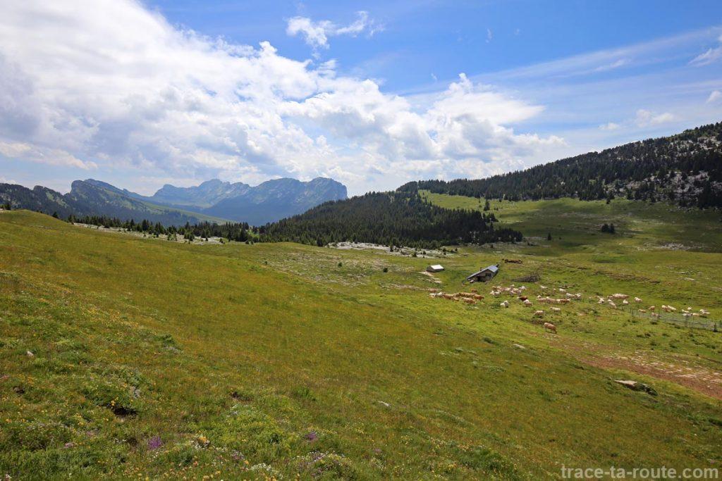 Habert de Saint-Vincent (Chalet de l'Alpe) sur le Plateau de l'Alpe, en Chartreuse, avec les Lances de Malissard en fond