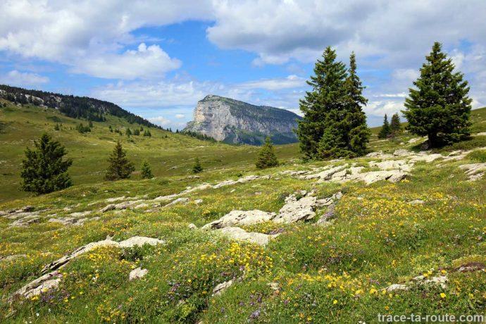 Prairie fleurie sur le Plateau de l'Alpe, en Chartreuse