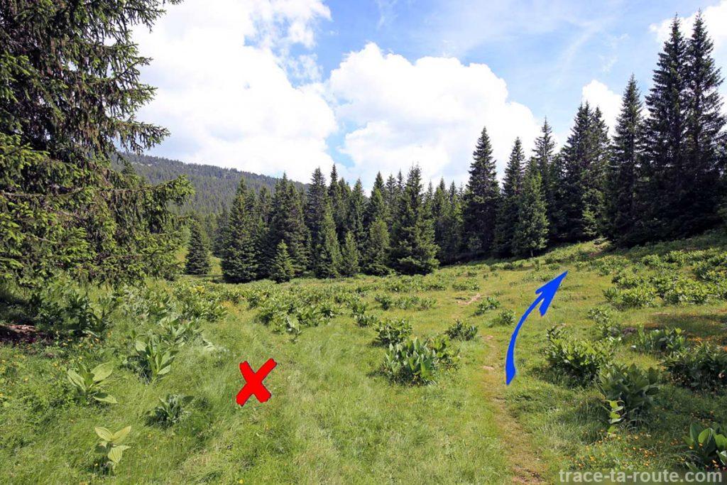 Tracé itinéraire pour la randonnée au sommet du Pinet