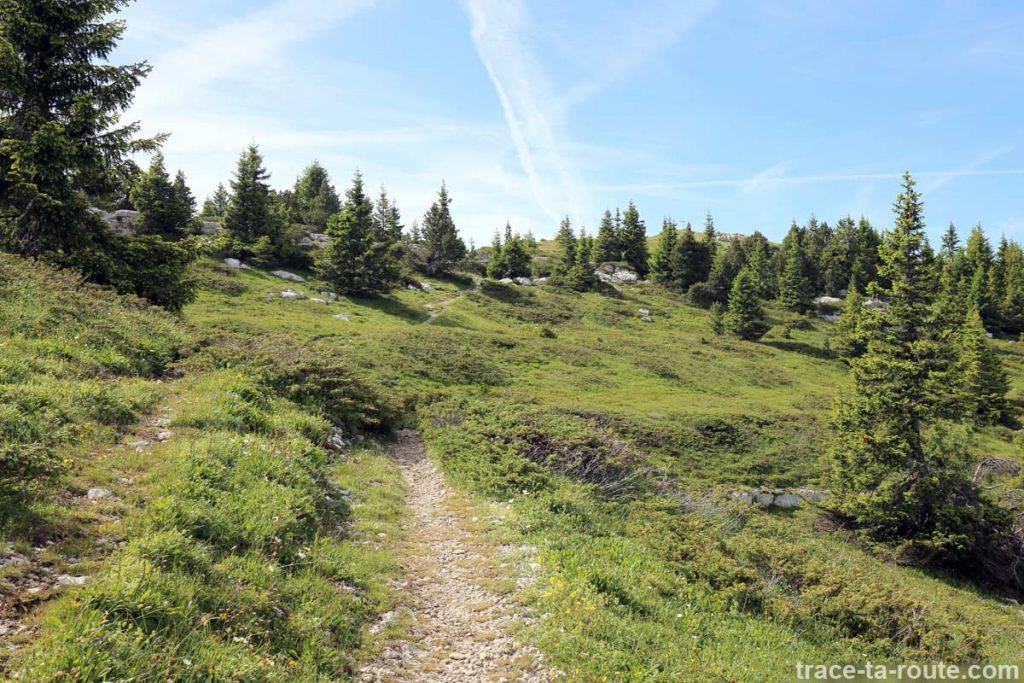 Plateau du Sommet du Pinet, en Chartreuse