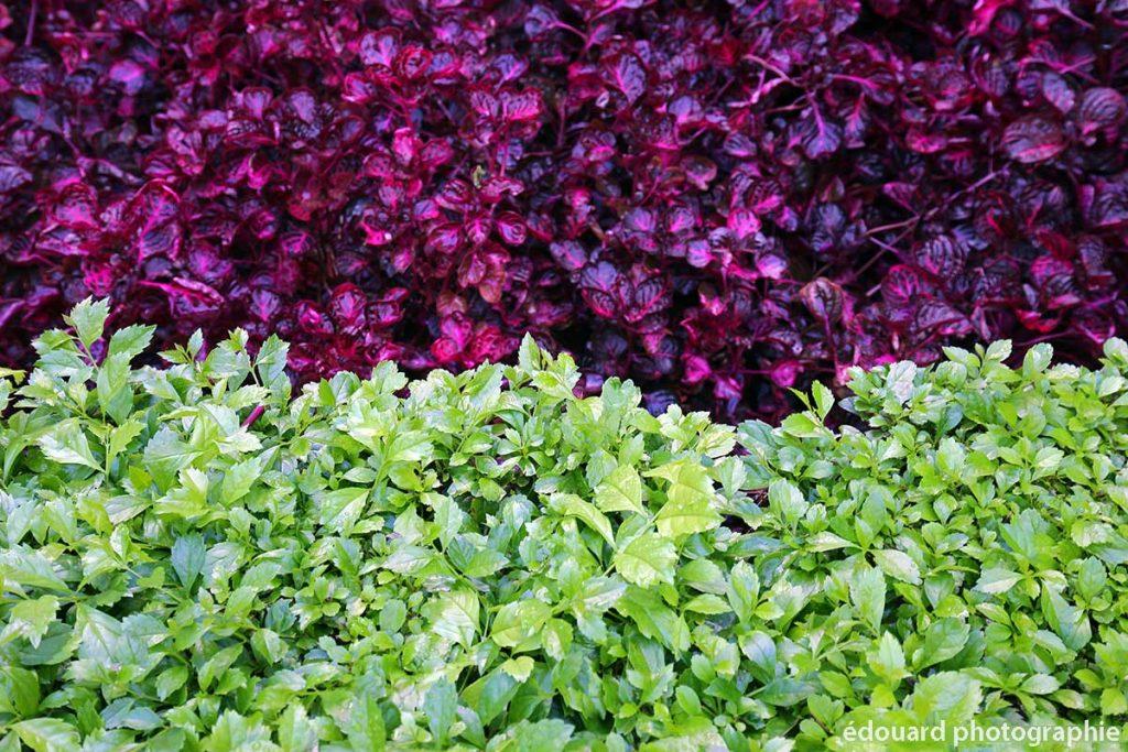 Plantes dans le jardin botanique du Paseo España, Malaga - édouard photographie © Trace Ta Route