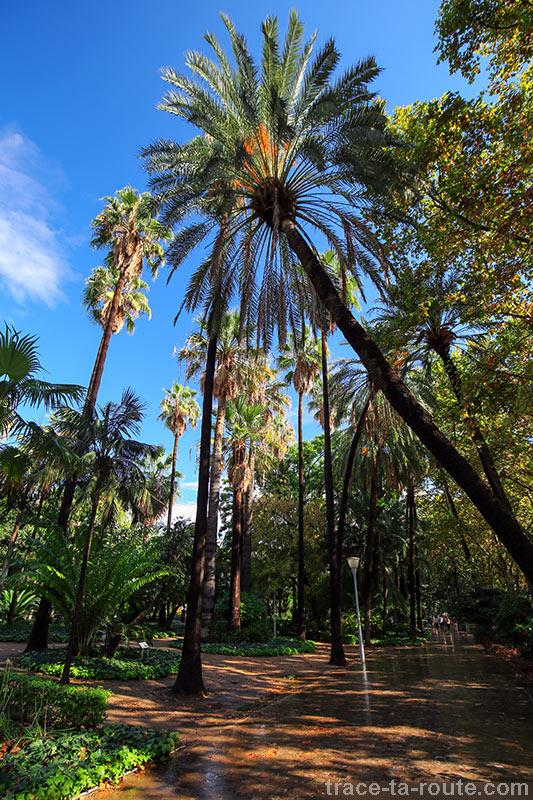 Palmiers au Paseo España, Malaga