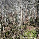 Sentier de randonnée sous les bois vers la Croix du Nivolet depuis le village de Pragondran (Savoie)