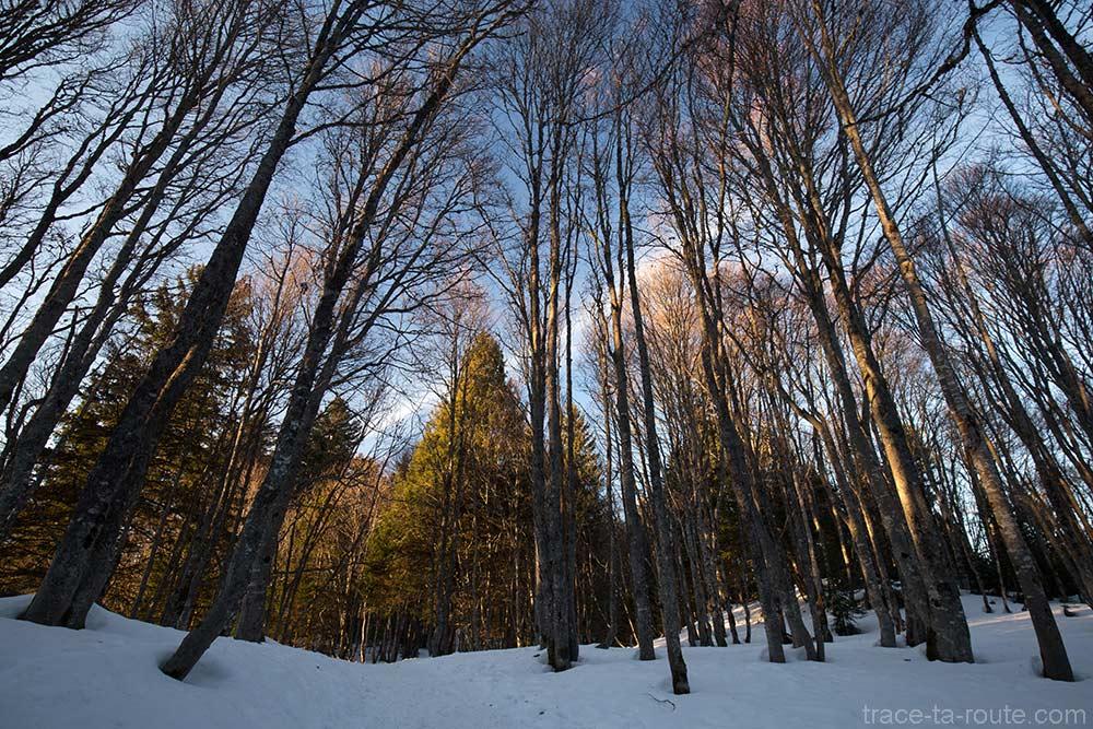 Sentier de randonnée dans les sous-bois en hiver, au sommet de la Montagne du Nivolet
