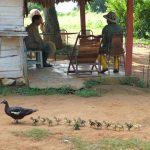 Region de Vinales - Unesco - blog voyages