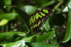 papillon - nature à Cuba - blog voyage