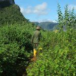 randonnée dans la vallée de Vinales - Cuba