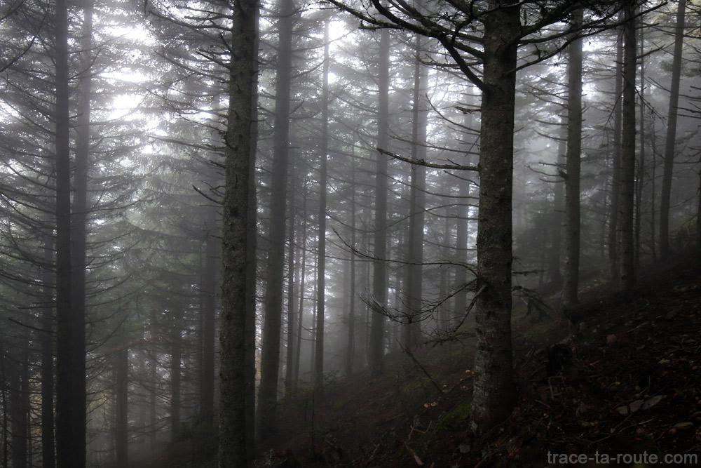 Brume dans les sous-bois du Grand Colon en Belledonne