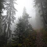 Arbres dans la brume au Grand Colon en Belledonne