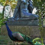 paon en liberte dans un parc à Porto