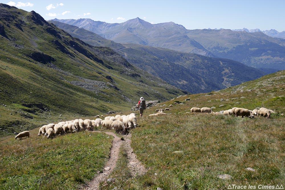 Alpage de brebis sous e Col des Marches, au-dessus de Valmeinier 1800 sur le trek du Tour du Mont Thabor