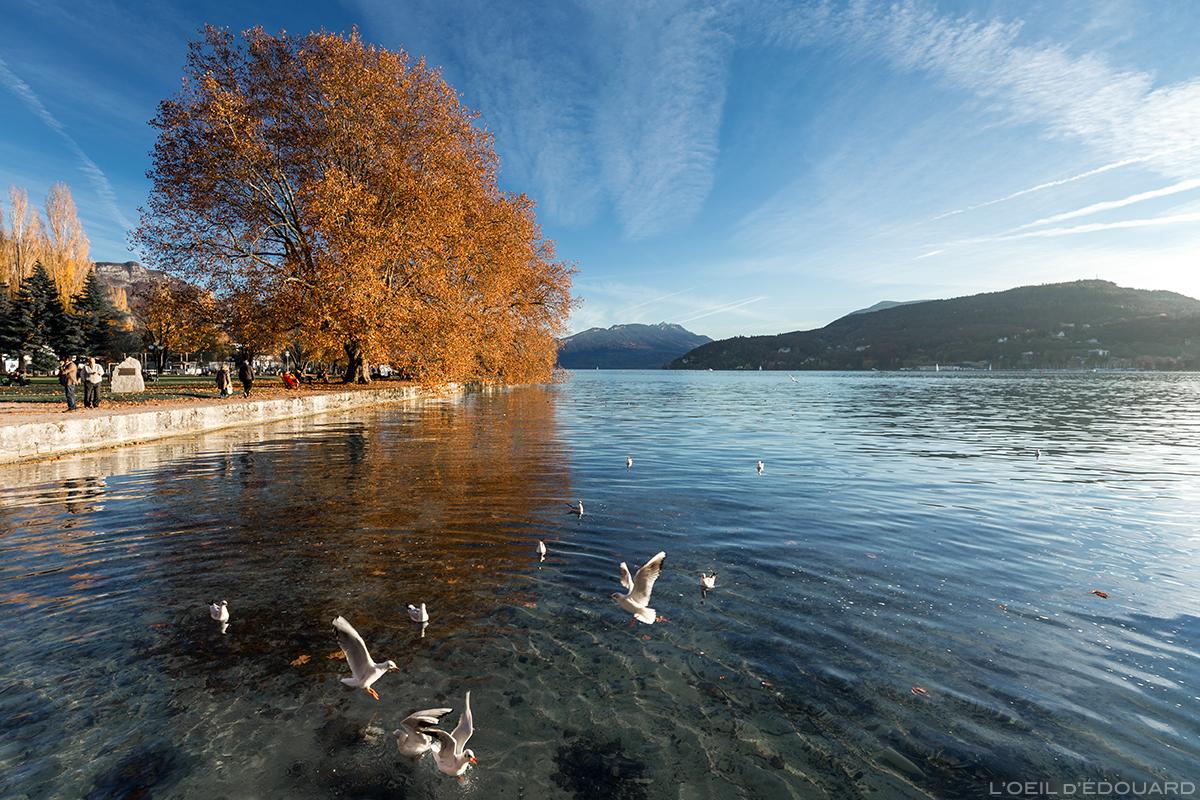 Bord du Lac d'Annecy © L'Oeil d'Édouard