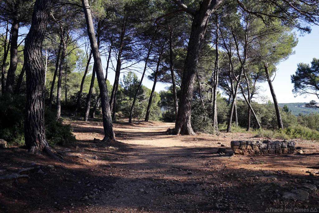 Chemin de randonnée dans la Réserve Naturelle de Sainte-Victoire