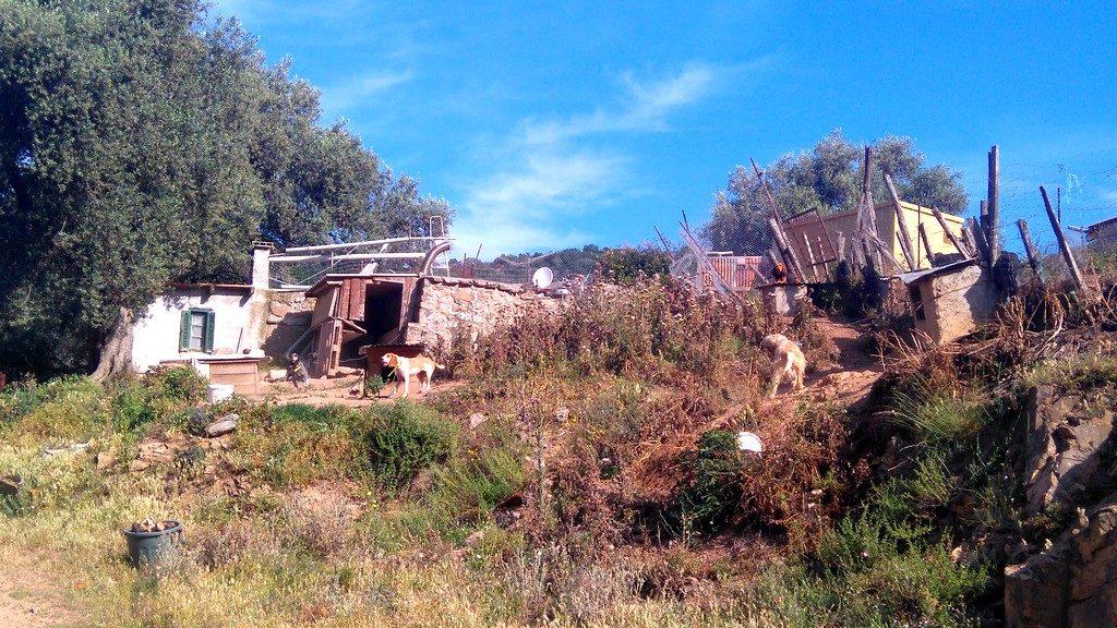 Corse-mareemonti-jour9-chiens-dernière-étape-vers-cargèse