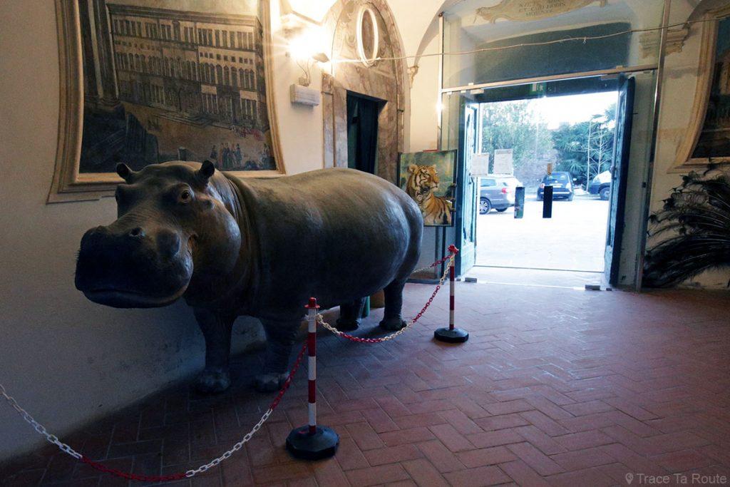 Musée zoologique, Villa Baciocchi, Capannoli (Valdera, Toscane, Italie)
